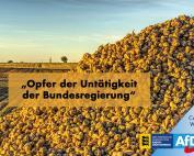 Zuckerrübenanbauer sind Opfer der Untätigkeit der Bundesregierung